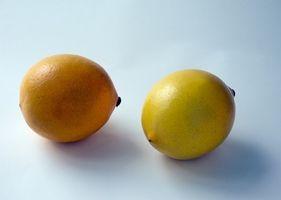 Informazioni sul Meyer Lemon pianta