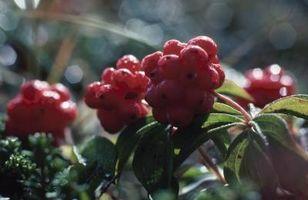 Elenco dei Virginia piante native