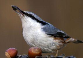 Bird Alimentatori Realizzato con burro di arachidi