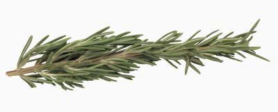 Come potare Rosemary a forma di cono