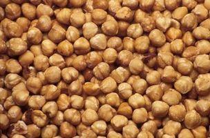 Come far germinare i semi di nocciole per la semina