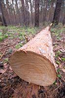 Come tagliare Cedar per un posto