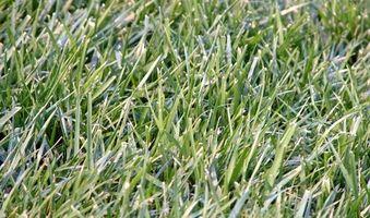 Piantare Seme dell'erba nel mese di novembre