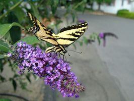 Elenco delle piante Butterfly Garden