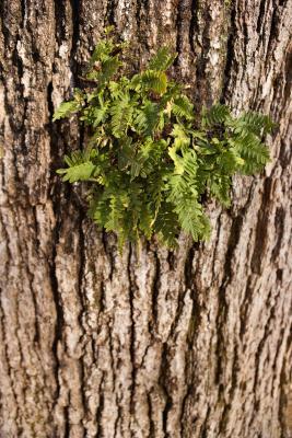 Come fare Ferns Disperse Offspring?