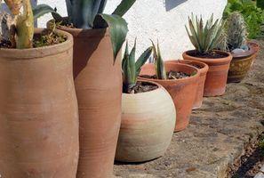 Fioriere e ceramica per le piante