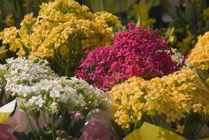 Come selezionare coltiva le luci per piante da fiore