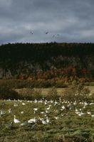 Paesaggi Cree tradizionali
