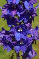 Diversi tipi di fiori blu