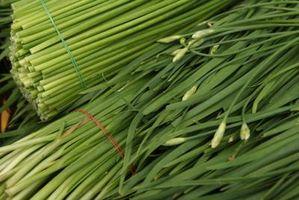 Come sbarazzarsi di cipolle e aglio in cantiere