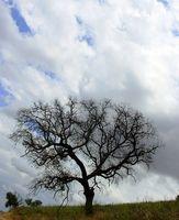 Come identificare gli alberi East Texas