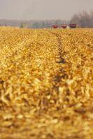 Come di controllo annuale Ryegrass