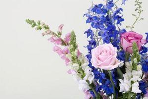 Come disporre i fiori con Five Roses