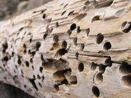 Come uccidere termiti in legna da ardere
