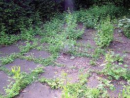 Come Spray un cantiere per Weeds