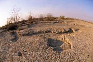 Come abbassare il sale deserto del suolo