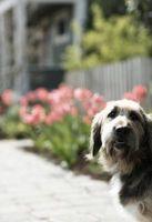 Metallo bordatura a tenere i cani fuori delle aiuole di fiori