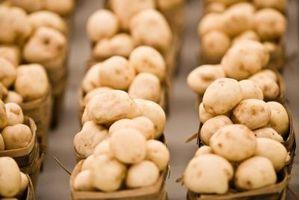Ciò che è necessario per avviare la coltivazione di funghi?