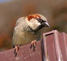 Home rimedi per uccello repellente