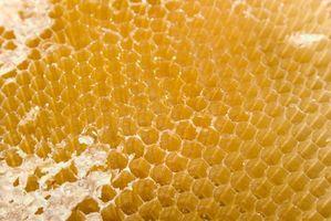 Posso usare cera d'api corso Shellac?