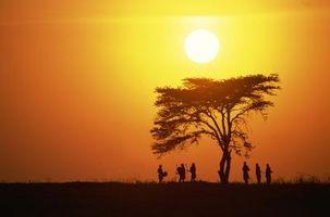Che alberi sono i migliori per un deserto bioma?