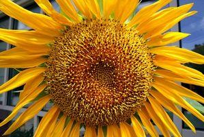 Tipi di Grandi fiori