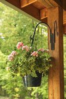 Come fare Hanging composizioni floreali