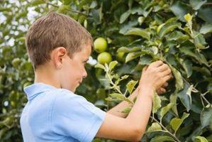 Come far germinare i semi melo