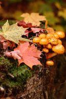 Fungo bianco e anelli sulla corteccia di albero