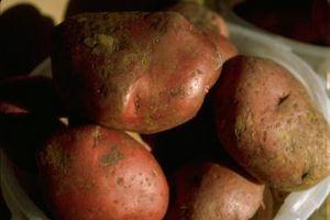 Quando coltivare patate rosse