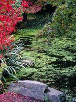 Tipi di Sedge per Giardini