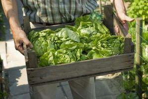 Pianta Linee Guida alimentari sostenibilità di progettazione