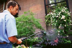 Come pulire Esterno di Windows con un allegato di tubo da giardino