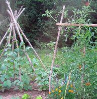 Come creare un giardino Pioneer