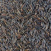Quando piantare Wild Rice in North Carolina