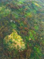 Come pulire Giallo alghe una piscina di acqua salata