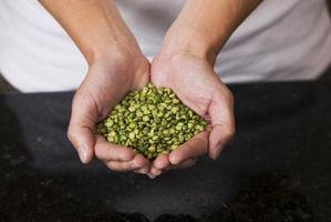 Idee di progetto della fiera di scienza per Crescere semi del fagiolo in liquidi