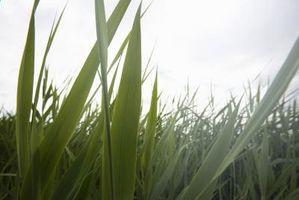 Il momento migliore per piantare erba Seed a Louisville, Kentucky