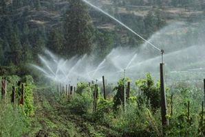Come installare un sistema di irrigazione per Bush