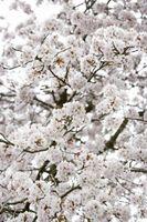 Alberi in fiore che crescono in terreno sabbioso
