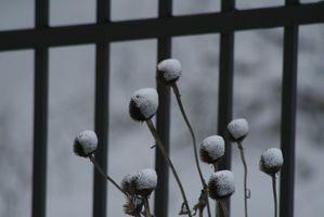 Che fiori sono di stagione in inverno?