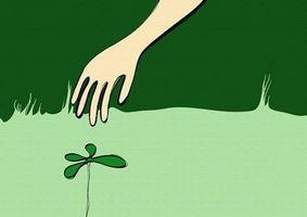 Come coltivare garofani nani