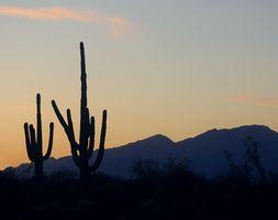 Come tagliare gli alberi in Arizona