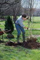 Come scavare con cautela Alberi