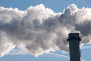Gli effetti degli inquinanti sulla crescita delle piante
