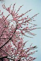 Fiori che crescono sugli alberi