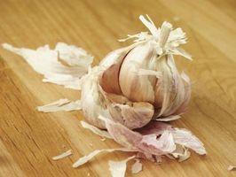 Come coltivare aglio a casa organicamente