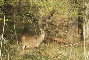 Come funziona Deer compensazione funziona?