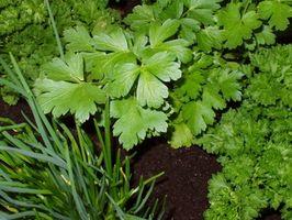 Come coltivare erbe contenitore Giardini per il profitto