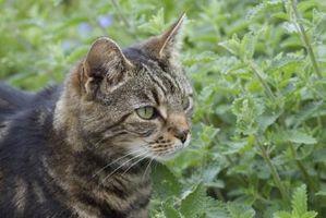 Sono Rosemary impianti sicuri per gli animali domestici?